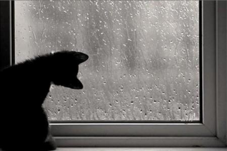 Problemă principală de ce transpira ferestrele termopan?